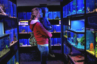 buying new fish from an aquarium can be a fascinating experience