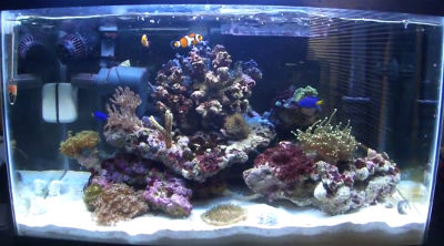 Typical beginners saltwater fish tank set up